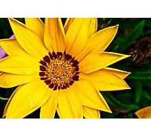 Yellowing is Saying Hello Photographic Print