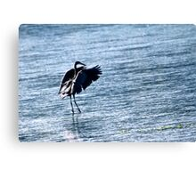 Water Dance.... Canvas Print