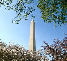 Cherry Blossom and The Washington Monument  by shoot2print