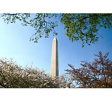 Cherry Blossom and The Washington Monument  Photographic Print