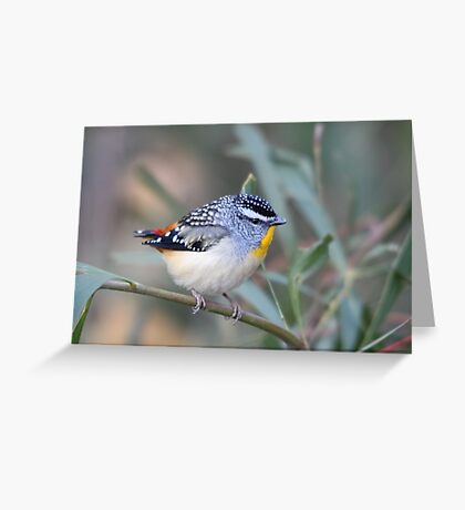 Spotted Pardalote Greeting Card