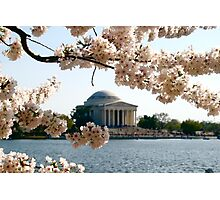 Cherry Blossoms and Jefferson Memorial  Photographic Print