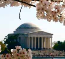 Cherry Blossoms and Jefferson Memorial  Sticker