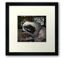 THE FUNNIEST BIRD IN FLORIDA Framed Print