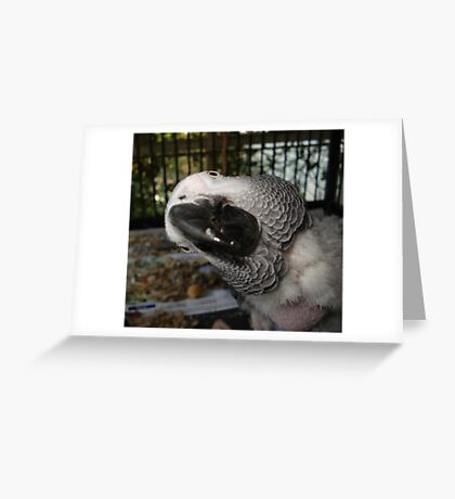THE FUNNIEST BIRD IN FLORIDA Greeting Card