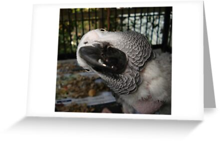 THE FUNNIEST BIRD IN FLORIDA by May Lattanzio