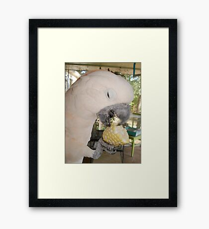 CASSIE AND THE CORN Framed Print