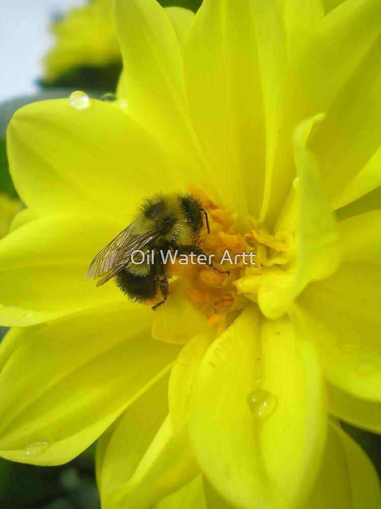 furry bee by Oil Water Artt