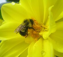 furry bee by Oil Water Artt