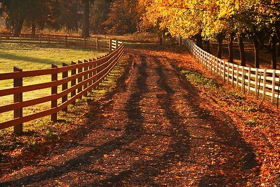 Fall Morning by Randy Richards
