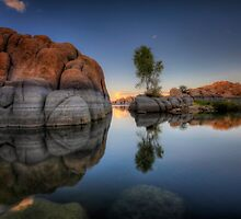 Rock Meets Tree by Bob Larson