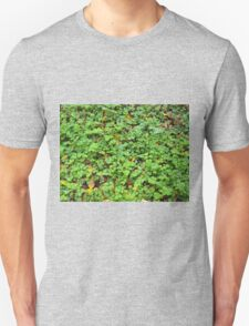 Dew on green plants that grow from the fallen yellow leaves T-Shirt