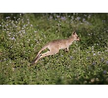 In Leaps & Bounds Photographic Print
