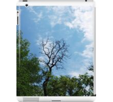 Leafless tree of acacia iPad Case/Skin