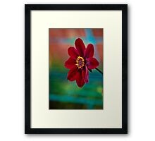 Velvet Red Framed Print