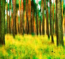 Spring Forest Colors by novopics