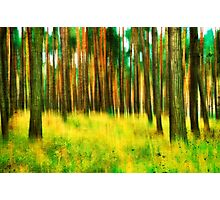 Spring Forest Colors Photographic Print