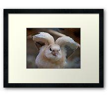 Look Mum..I Can Make Angel Wings!! - Juvenile Dove - NZ Framed Print