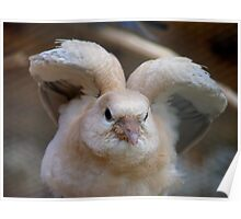 Look Mum..I Can Make Angel Wings!! - Juvenile Dove - NZ Poster
