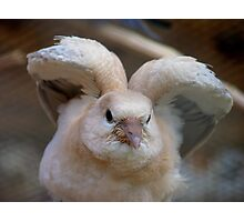 Look Mum..I Can Make Angel Wings!! - Juvenile Dove - NZ Photographic Print
