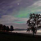 Tree & Aurora Borealis -II by Frank Olsen
