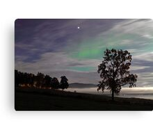 Tree & Aurora Borealis -II Canvas Print
