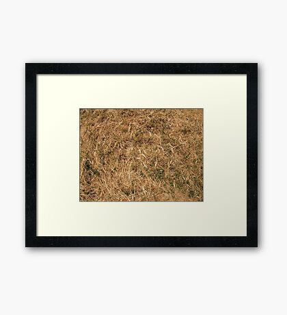 Dry grass in a meadow Framed Print