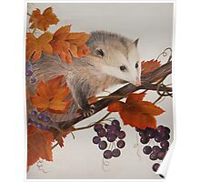 Sneaky Opposum Stealing Grapes Poster