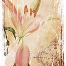 Old Greating Card by Rozalia Toth