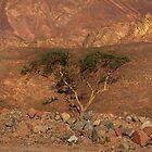 Camel Tree by Helen Shippey