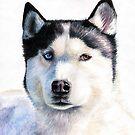 Dogs Eyes by Nicole Zeug