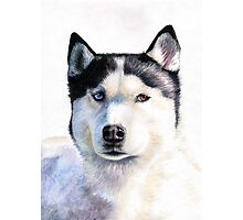 Husky Blue Photographic Print