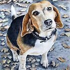 Beagle Autumn by Nicole Zeug