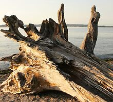 Drift Logs at Birch Bay by Really-Rosiem