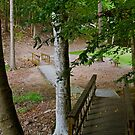 A Path in the Park by Martha Andreatos