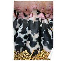 5 little piggies Poster