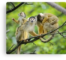 Squirrel monkeys family Canvas Print