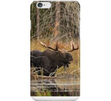 Smiling Moose, Algonquin park iPhone Case/Skin