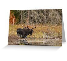 Smiling Moose, Algonquin park Greeting Card