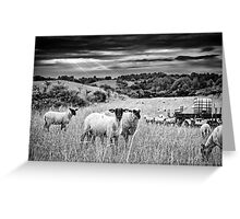 Sheep's Moment Greeting Card