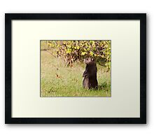 Black Coat Groundhog Framed Print