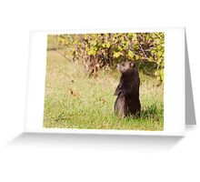 Black Coat Groundhog Greeting Card