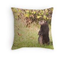 Black Coat Groundhog Throw Pillow