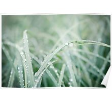 green reed canarygrass with waterdrops I Poster