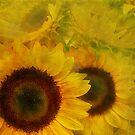 soft sunflowers by Tamara  Kaylor