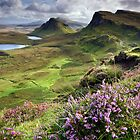 Scotland: My Bonny Heather by Angie Latham