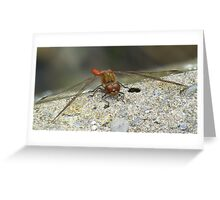 Dragon Fly. Greeting Card