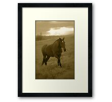 4 You !   by Brown Sugar .  has been FEATURED in EQUINE Portrait Photography . Views (51) thx! Framed Print