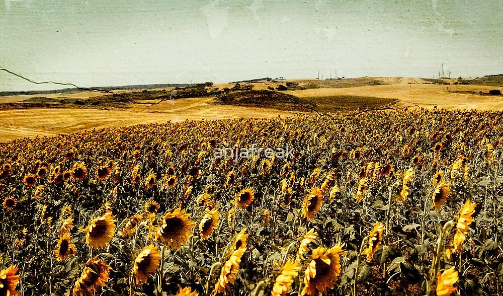 Sunflower Field Vintage by anjafreak