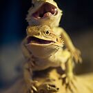 Dragons by Jessica Loftus